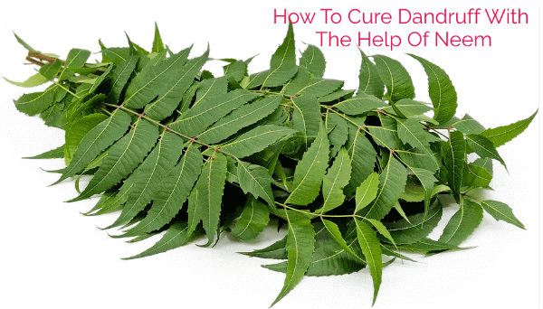 How To Cure Dandruff With The Help Of Neem