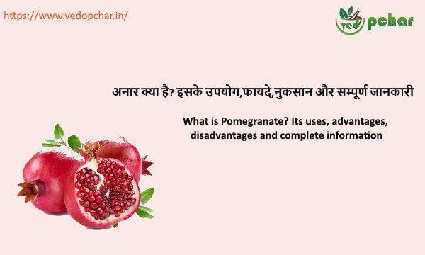 Pomegranate in hindi : अनार क्या है? इसके उपयोग,फायदे,नुकसान और सम्पूर्ण जानकारी