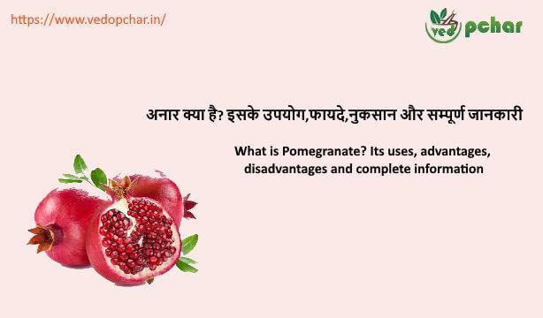 Pomegranate in hindi