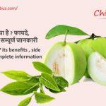 Amrud in hindi